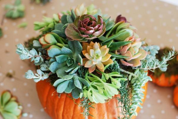 Pumpking Succulent Arrangment