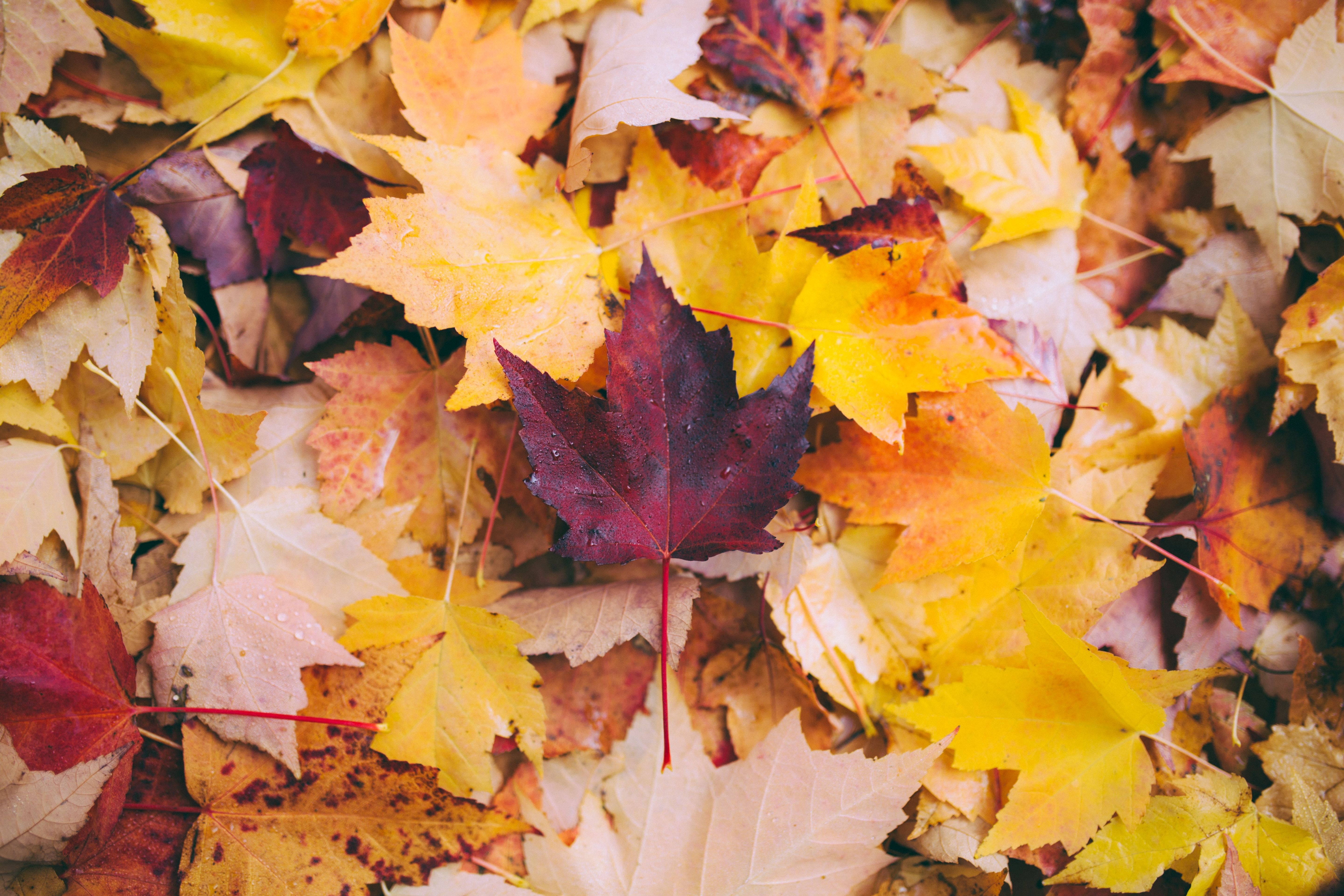 Fall Event Planning Ideas