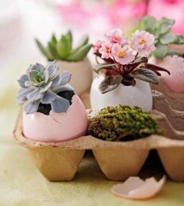 petite_plants_in_eggshells